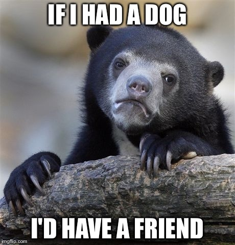 Confession Bear Meme | IF I HAD A DOG I'D HAVE A FRIEND | image tagged in memes,confession bear | made w/ Imgflip meme maker