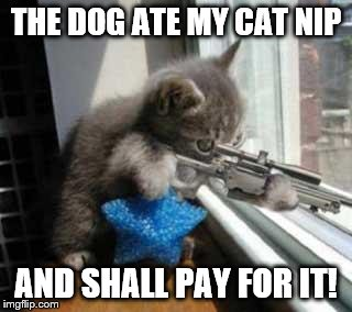 CatSniper | THE DOG ATE MY CAT NIP AND SHALL PAY FOR IT! | image tagged in catsniper | made w/ Imgflip meme maker