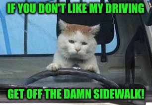 RayCat driving school | IF YOU DON'T LIKE MY DRIVING GET OFF THE DAMN SIDEWALK! | image tagged in memes,raycat,driving school | made w/ Imgflip meme maker
