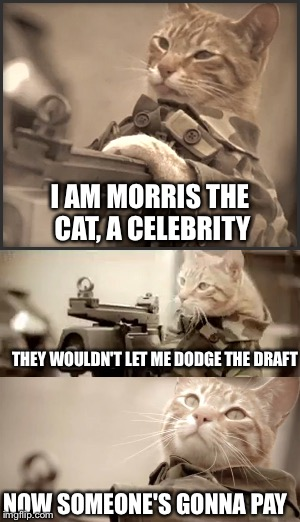 I AM MORRIS THE CAT, A CELEBRITY THEY WOULDN'T LET ME DODGE THE DRAFT NOW SOMEONE'S GONNA PAY | made w/ Imgflip meme maker