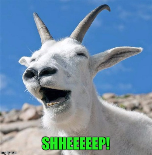 Laughing Goat | SHHEEEEEP! | image tagged in memes,laughing goat | made w/ Imgflip meme maker