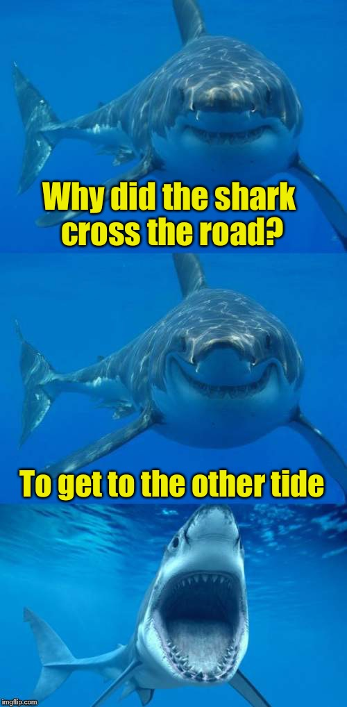 Bad Shark Pun for Shark Week.  | Why did the shark cross the road? To get to the other tide | image tagged in bad shark pun,memes,shark week,shark | made w/ Imgflip meme maker