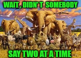 animals | WAIT , DIDN' T  SOMEBODY SAY TWO AT A TIME | image tagged in animals | made w/ Imgflip meme maker