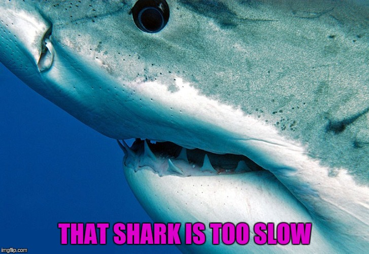 THAT SHARK IS TOO SLOW | made w/ Imgflip meme maker