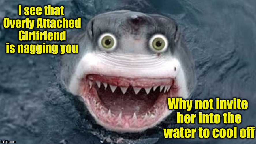Overly Attached Shark II for Shark Week (Raydog and Discovery Channel Event)