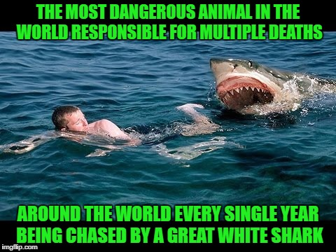 Who's the more vicious killer?  Shark Week...A Raydog & Discovery Channel Event | THE MOST DANGEROUS ANIMAL IN THE WORLD RESPONSIBLE FOR MULTIPLE DEATHS AROUND THE WORLD EVERY SINGLE YEAR BEING CHASED BY A GREAT WHITE SHAR | image tagged in shark chasing man,memes,shark week,animals,funny,two killers | made w/ Imgflip meme maker