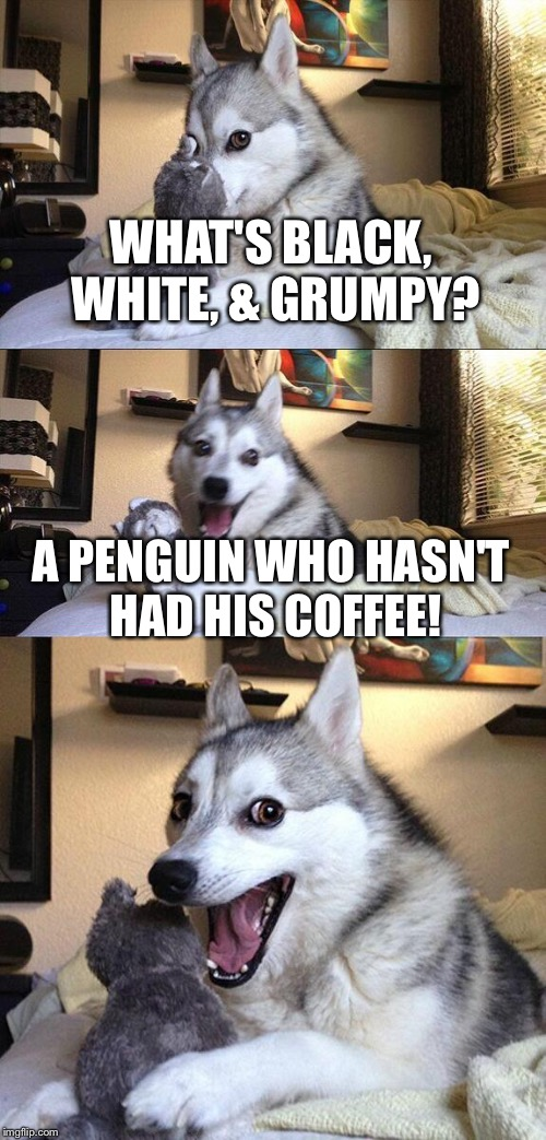 Bad Pun Dog Meme | WHAT'S BLACK, WHITE, & GRUMPY? A PENGUIN WHO HASN'T HAD HIS COFFEE! | image tagged in memes,bad pun dog,penguin,coffee | made w/ Imgflip meme maker