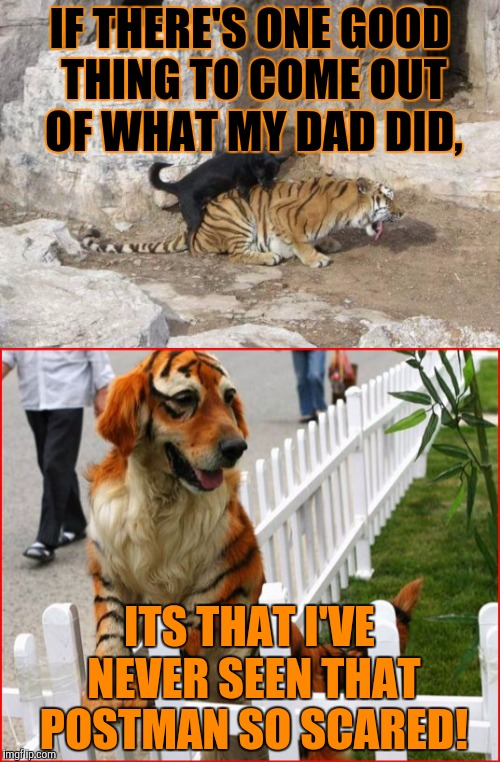 Tiger dogs, Tiger Week, a TigerLegend1046 event | IF THERE'S ONE GOOD THING TO COME OUT OF WHAT MY DAD DID, ITS THAT I'VE NEVER SEEN THAT POSTMAN SO SCARED! | image tagged in tiger week,tigerlegend1046,tiger dog,dog,striped fur,scared postman | made w/ Imgflip meme maker