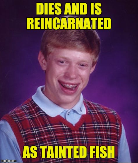 Bad Luck Brian Meme | DIES AND IS REINCARNATED AS TAINTED FISH | image tagged in memes,bad luck brian | made w/ Imgflip meme maker