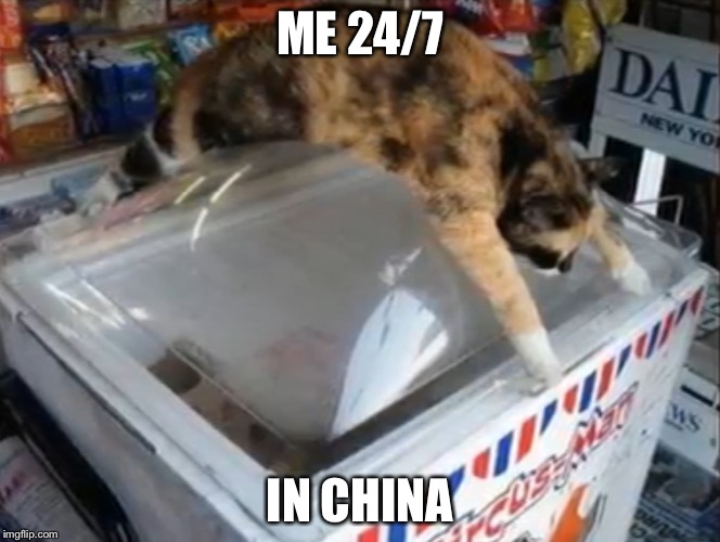 The heat the heat | ME 24/7 IN CHINA | image tagged in memes,meme,cats,funny,funny cat | made w/ Imgflip meme maker