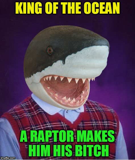 Bad Luck Shark | KING OF THE OCEAN A RAPTOR MAKES HIM HIS B**CH | image tagged in bad luck shark | made w/ Imgflip meme maker