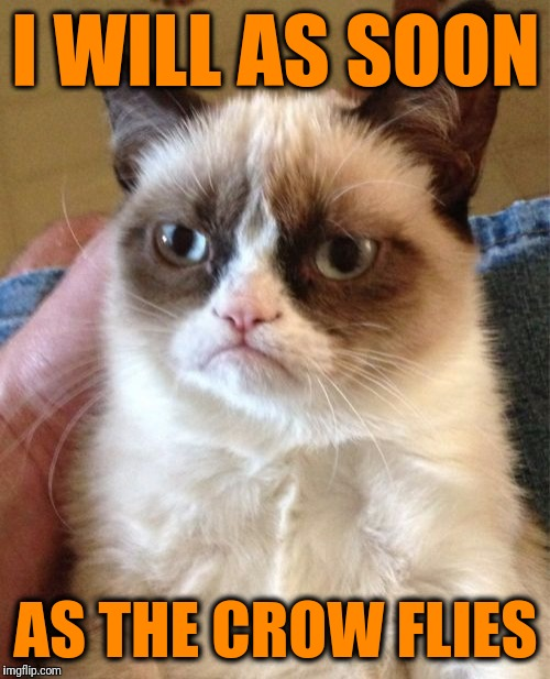 Grumpy Cat Meme | I WILL AS SOON AS THE CROW FLIES | image tagged in memes,grumpy cat | made w/ Imgflip meme maker