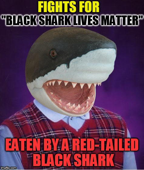 Bad Luck Shark | ''BLACK SHARK LIVES MATTER'' EATEN BY A RED-TAILED BLACK SHARK FIGHTS FOR | image tagged in bad luck shark | made w/ Imgflip meme maker