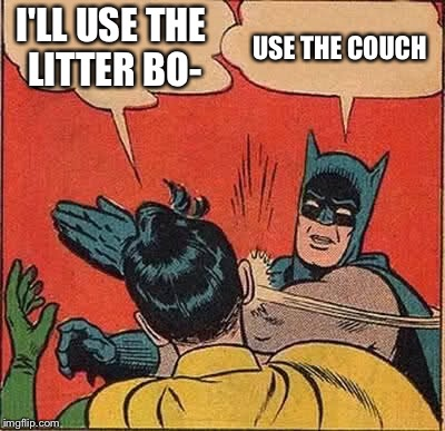 Batman Slapping Robin Meme | I'LL USE THE LITTER BO- USE THE COUCH | image tagged in memes,batman slapping robin | made w/ Imgflip meme maker