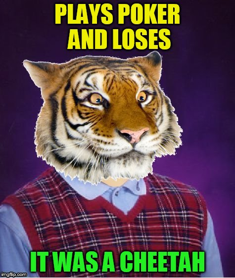 PLAYS POKER AND LOSES IT WAS A CHEETAH | image tagged in bad luck tiger | made w/ Imgflip meme maker