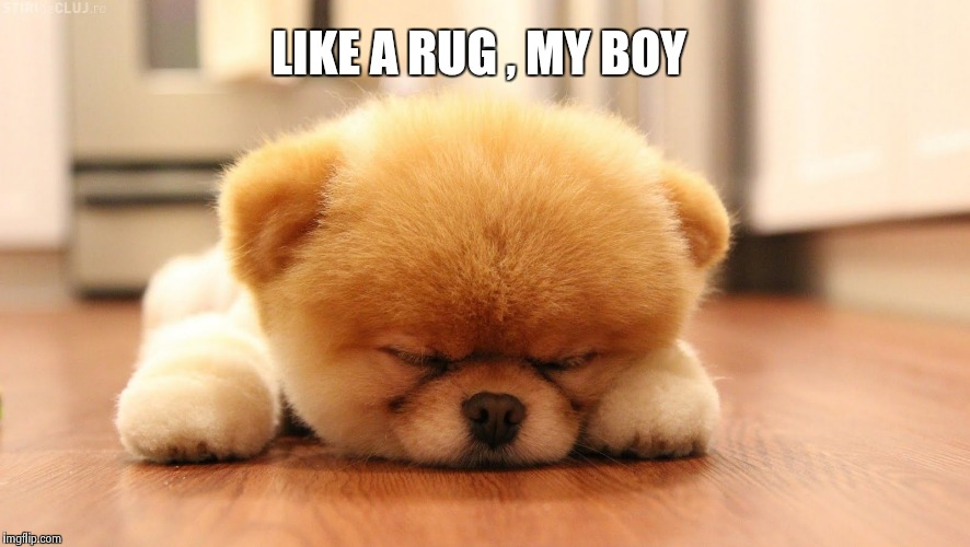 Sleeping dog | LIKE A RUG , MY BOY | image tagged in sleeping dog | made w/ Imgflip meme maker