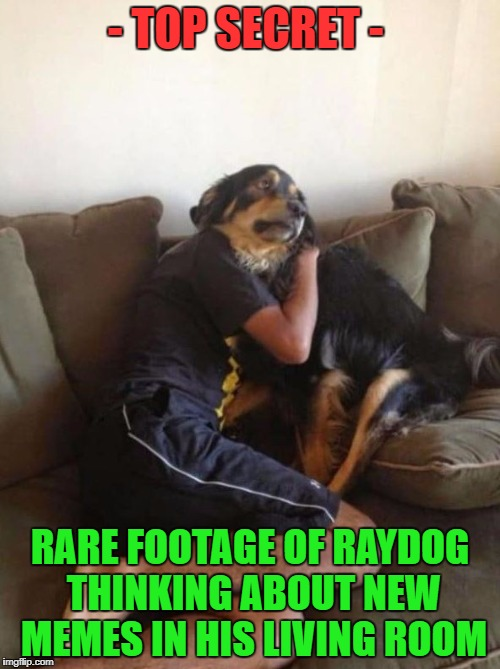 I sometimes wonder how all of you guys look like, when you're memeing | - TOP SECRET - RARE FOOTAGE OF RAYDOG THINKING ABOUT NEW MEMES IN HIS LIVING ROOM | image tagged in optical illusion dog,raydog,memes,funny,dogs,animals | made w/ Imgflip meme maker