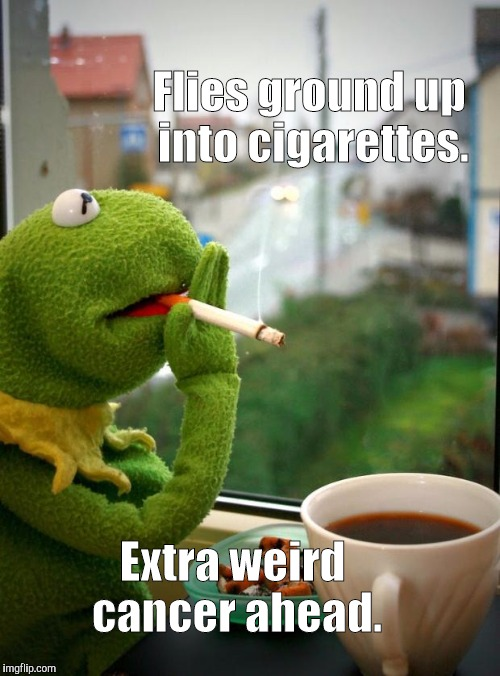 Bug * * * * * * * * * * * * cigs | Flies ground up into cigarettes. Extra weird cancer ahead. | image tagged in funny,kermit the frog,dark humor,animals,memes,cancer | made w/ Imgflip meme maker