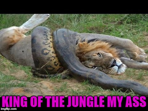 KING OF THE JUNGLE MY ASS | made w/ Imgflip meme maker
