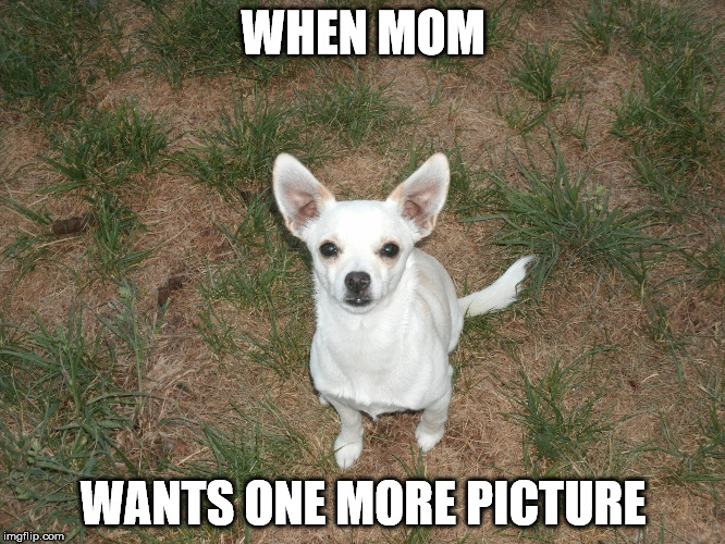 handsome puppy | WHEN MOM WANTS ONE MORE PICTURE | image tagged in memes | made w/ Imgflip meme maker