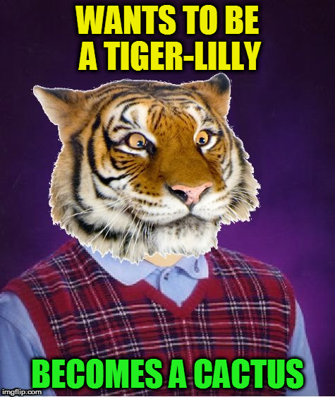 WANTS TO BE A TIGER-LILLY BECOMES A CACTUS | image tagged in bad luck tiger | made w/ Imgflip meme maker