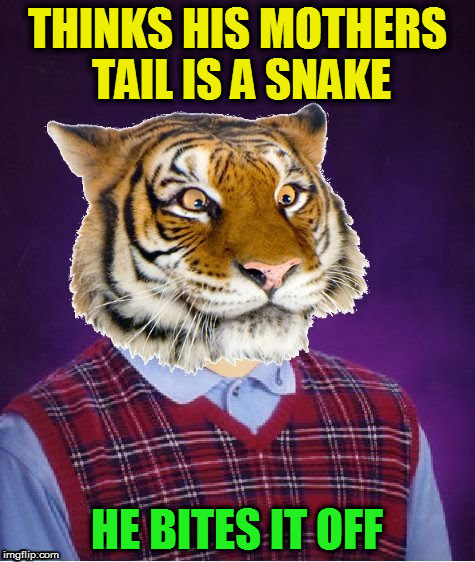 THINKS HIS MOTHERS TAIL IS A SNAKE HE BITES IT OFF | image tagged in bad luck tiger | made w/ Imgflip meme maker