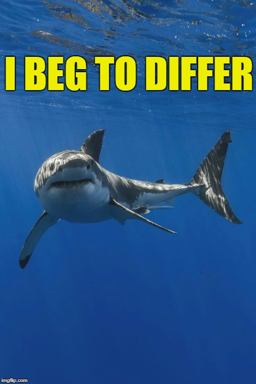 Shark....craziness_all_the_way | I BEG TO DIFFER | image tagged in sharkcraziness_all_the_way | made w/ Imgflip meme maker