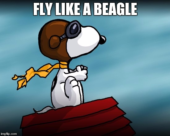 someone give me the ext verse  | FLY LIKE A BEAGLE | image tagged in memes,steve miller band | made w/ Imgflip meme maker
