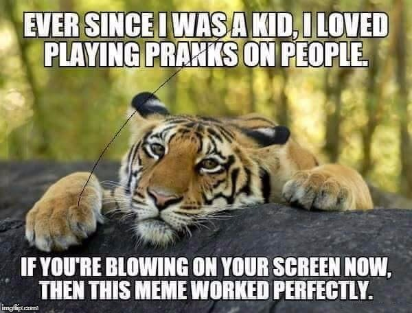 Meme brought back for Tiger Weed, a TigerLegend1046 event | EVER SINCE I WAS A KID, I LOVED PLAYING PRANKS ON PEOPLE IF YOU'RE BLOWING ON YOUR SCREEN NOW, THEN THIS MEME WORKED PERFECTLY. | image tagged in memes,tigerlegend1046,tiger week | made w/ Imgflip meme maker