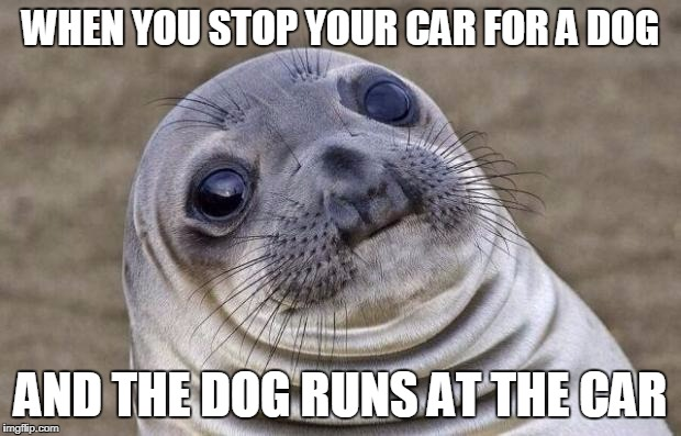 Awkward Moment Sealion Meme | WHEN YOU STOP YOUR CAR FOR A DOG AND THE DOG RUNS AT THE CAR | image tagged in memes,awkward moment sealion | made w/ Imgflip meme maker