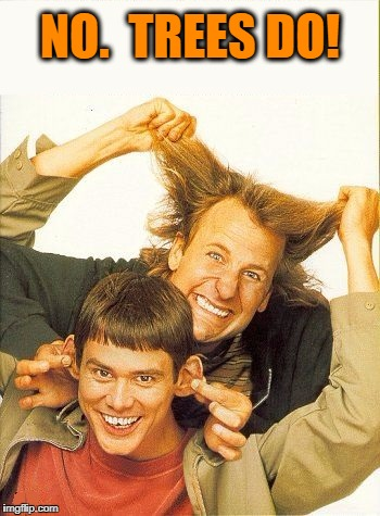 DUMB and dumber | NO.  TREES DO! | image tagged in dumb and dumber | made w/ Imgflip meme maker