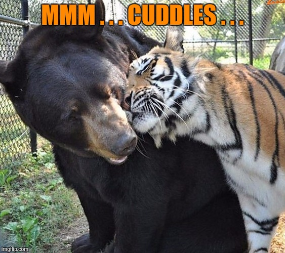 MMM . . . CUDDLES . . . | made w/ Imgflip meme maker