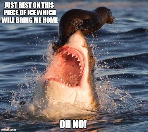 Doomed From The Start. Shark Week, A Raydog Event | JUST REST ON THIS PIECE OF ICE WHICH WILL BRING ME HOME OH NO! | image tagged in memes,travelonshark | made w/ Imgflip meme maker