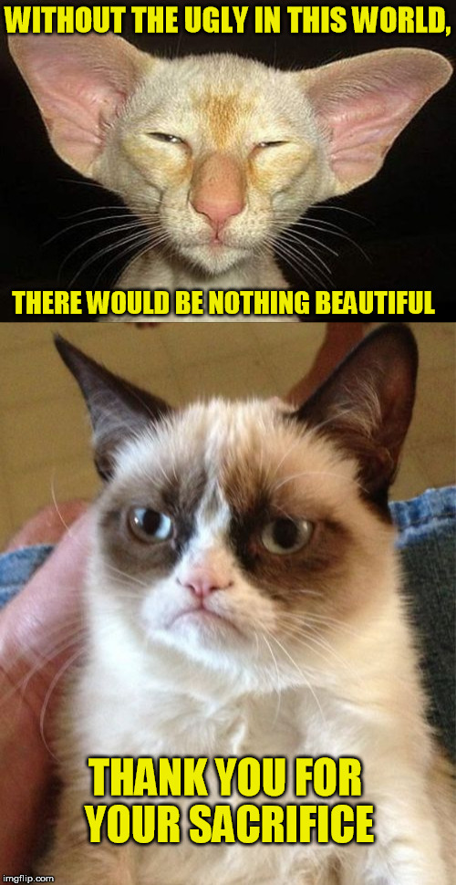 Confucius Cat says: | WITHOUT THE UGLY IN THIS WORLD, THANK YOU FOR YOUR SACRIFICE THERE WOULD BE NOTHING BEAUTIFUL | image tagged in cat,ugly,beautiful,grumpy cat,confucius cat | made w/ Imgflip meme maker