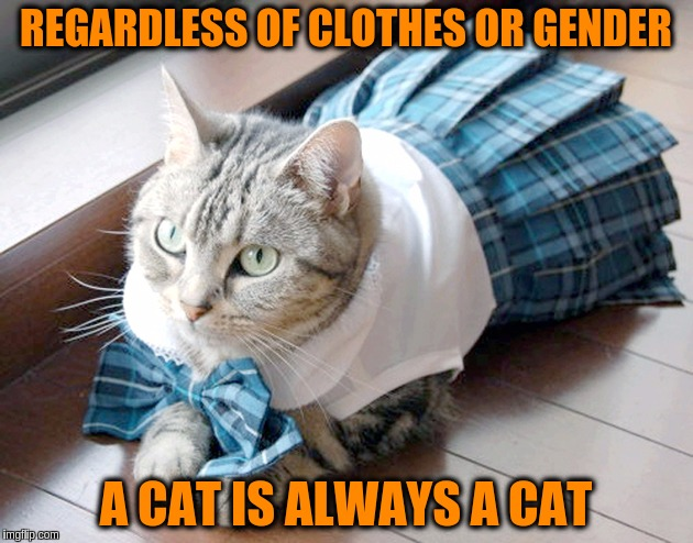 Regardless of clothes or gender a cat is always a cat | REGARDLESS OF CLOTHES OR GENDER A CAT IS ALWAYS A CAT | image tagged in memes,acim,cats,lgbt,gender identity,gender confusion | made w/ Imgflip meme maker