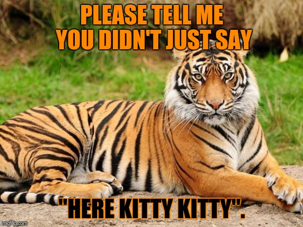 "BIG kitty! Tiger Week, a TigerLegend1046 event | PLEASE TELL ME YOU DIDN'T JUST SAY ""HERE KITTY KITTY"". 