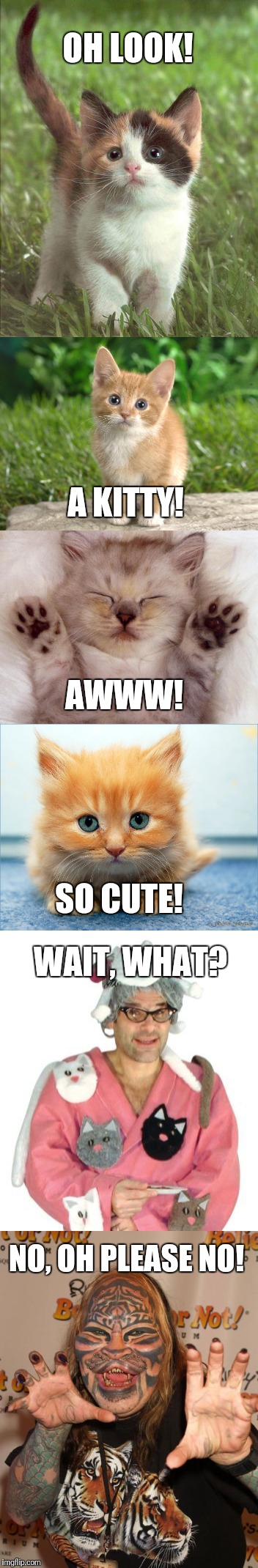 I used to be a cat lover | OH LOOK! NO, OH PLEASE NO! A KITTY! AWWW! SO CUTE! WAIT, WHAT? | image tagged in cats,weirdo | made w/ Imgflip meme maker