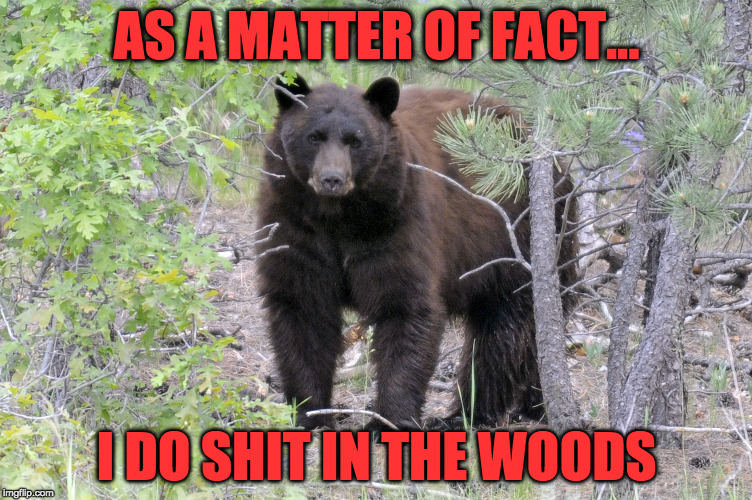 AS A MATTER OF FACT... I DO SHIT IN THE WOODS | image tagged in brownbear | made w/ Imgflip meme maker