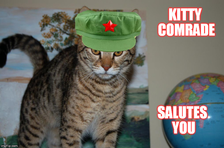 KITTY COMRADE SALUTES YOU | made w/ Imgflip meme maker