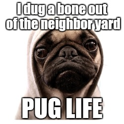 pug life | I dug a bone out of the neighbor yard PUG LIFE | image tagged in pug life | made w/ Imgflip meme maker
