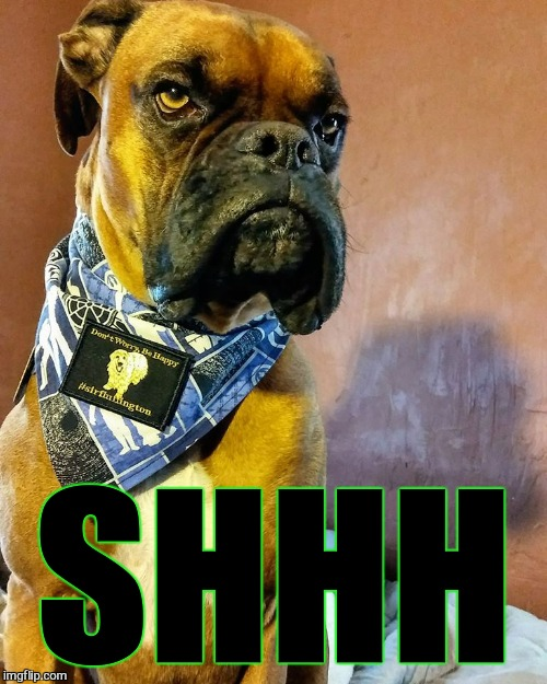 Grumpy Dog | SHHH | image tagged in grumpy dog | made w/ Imgflip meme maker