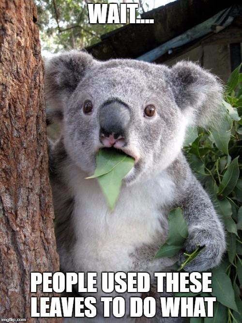 Surprised Koala Meme | WAIT.... PEOPLE USED THESE LEAVES TO DO WHAT | image tagged in memes,surprised koala | made w/ Imgflip meme maker