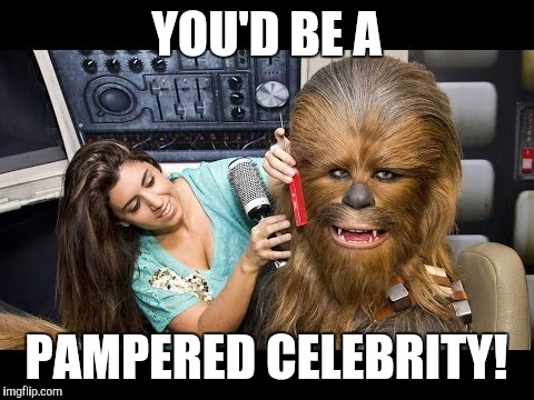 Memes, Star Wars, Chewbacca | YOU'D BE A PAMPERED CELEBRITY! | image tagged in memes,star wars,chewbacca | made w/ Imgflip meme maker