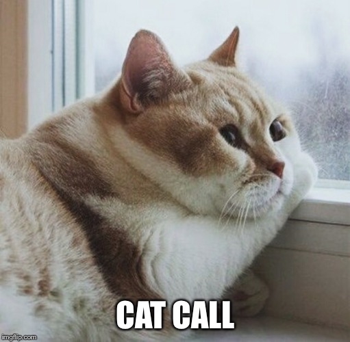 CAT CALL | made w/ Imgflip meme maker