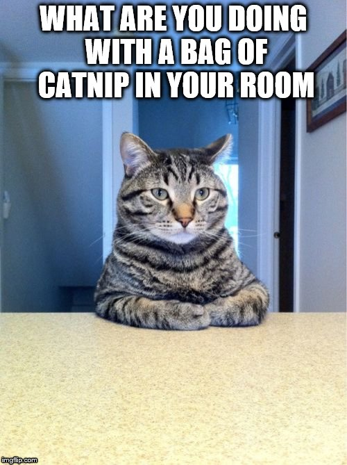 Take A Seat Cat Meme | WHAT ARE YOU DOING WITH A BAG OF CATNIP IN YOUR ROOM | image tagged in memes,take a seat cat | made w/ Imgflip meme maker