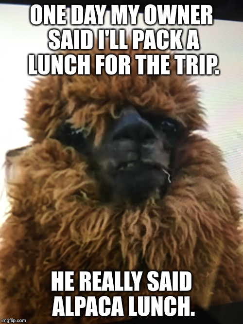 Been a while since I uploaded a meme. | ONE DAY MY OWNER SAID I'LL PACK A LUNCH FOR THE TRIP. HE REALLY SAID ALPACA LUNCH. | image tagged in concerned llama | made w/ Imgflip meme maker