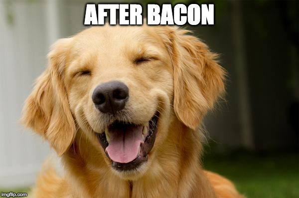 Happy Dog | AFTER BACON | image tagged in happy dog | made w/ Imgflip meme maker