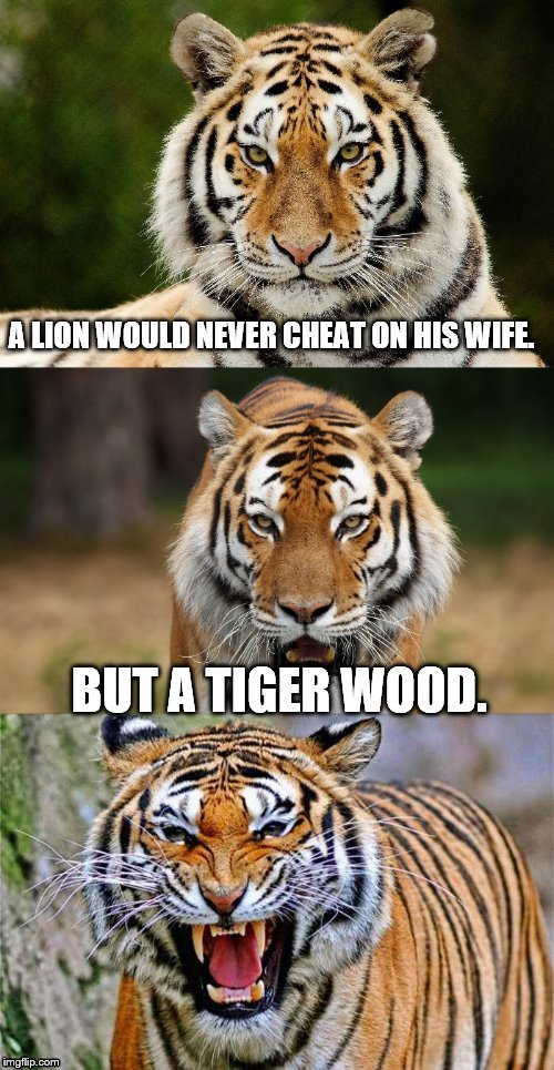 True story for Tiger Week, a TigerLegend1046 event  | A LION WOULD NEVER CHEAT ON HIS WIFE. BUT A TIGER WOOD. | image tagged in tiger puns,tiger woods,cheating husband,lion | made w/ Imgflip meme maker