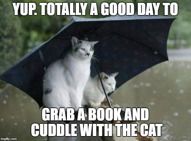 Phoenix AZ Record rain fall 2014 | YUP. TOTALLY A GOOD DAY TO GRAB A BOOK AND CUDDLE WITH THE CAT | image tagged in phoenix az record rain fall 2014 | made w/ Imgflip meme maker