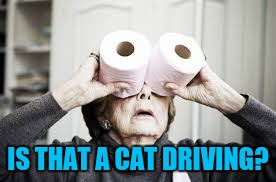 IS THAT A CAT DRIVING? | made w/ Imgflip meme maker